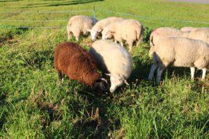 lammas7-pieni
