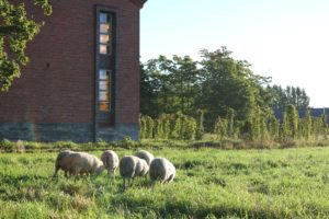 lammas9-pieni