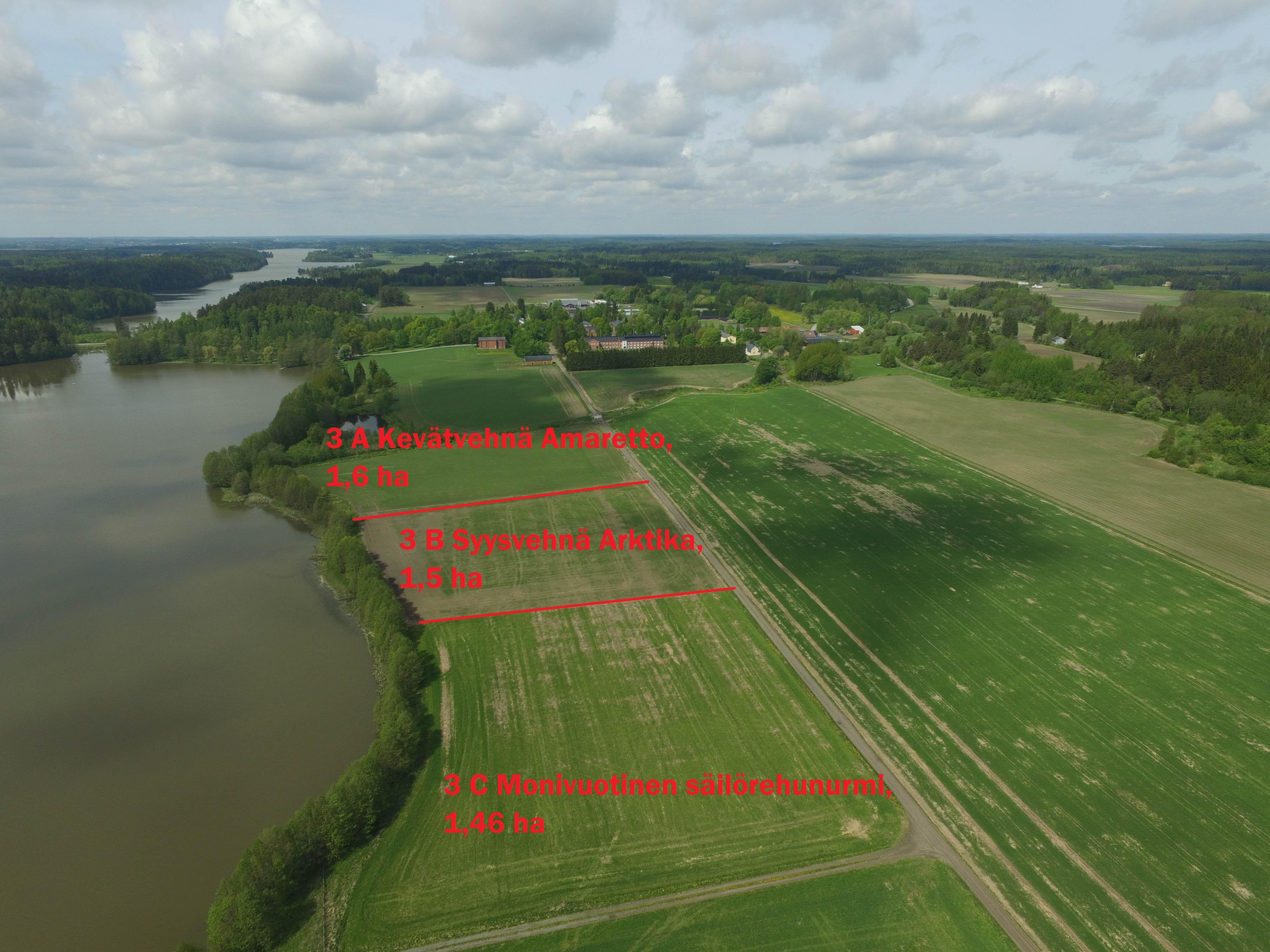 3 Lamminranta kasvulohkot vuonna 2017.